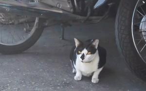 ビアンブアマンションの近所にいるネコ
