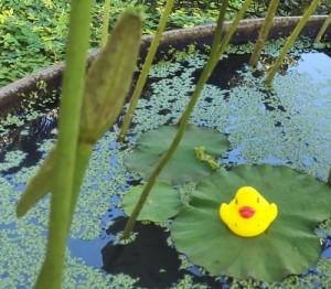 lotusn